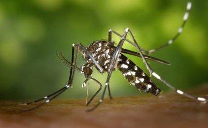 Recomendaciones para evitar la propagación de la picadura del mosquito tigre