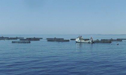 La acuicultura será clave en el futuro según el Consejo de productos del mar de Noruega