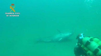Detenidos en Almería nueve presuntos furtivos y decomisadas casi dos toneladas de atún rojo pescado ilegalmente