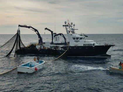 """Grupo Balfegó vincula la """"gestión eficaz"""" del atún rojo a la recuperación de la especie"""