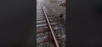 Un maquinista de tren chileno salva a un perro que había sido abandonado y atado a las vías