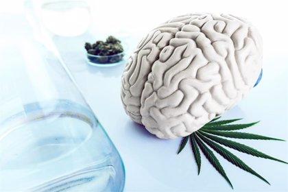 Empezar a consumir cannabis en la adolescencia afecta a la maduración del cerebro