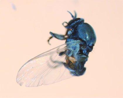 Consejos para evitar la mordedura de la mosca negra