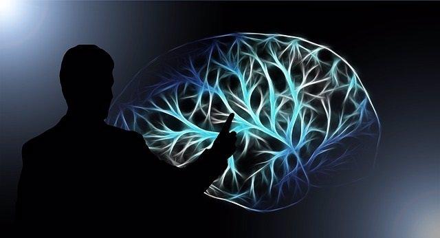EEUU.- Investigadores restauran algunas funciones en el cerebro de un cerdo horas después de la muerte