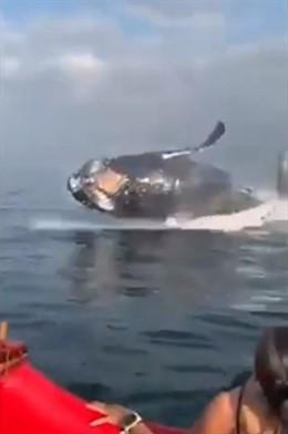 Una ballena emerge y sorprende a un grupo de bañistas en Brasil