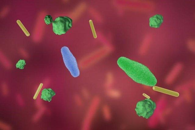Los probióticos evolucionan en el intestino
