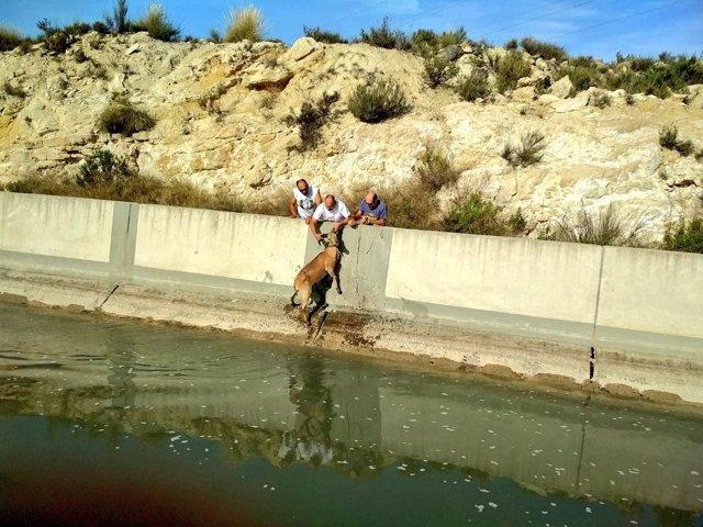 Imagen del rescate de uno de los arruí