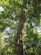 Foto: 'Sembrando Vida', el plan ambiental financiado por México que alivia al pueblo salvadoreño