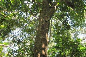 'Sembrando Vida', el plan ambiental financiado por México que alivia al pueblo salvadoreño