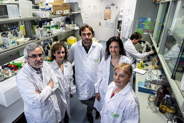 Investigadores aragoneses hallan un nuevo método para diagnosticar de forma precoz la aspergilosis invasiva.