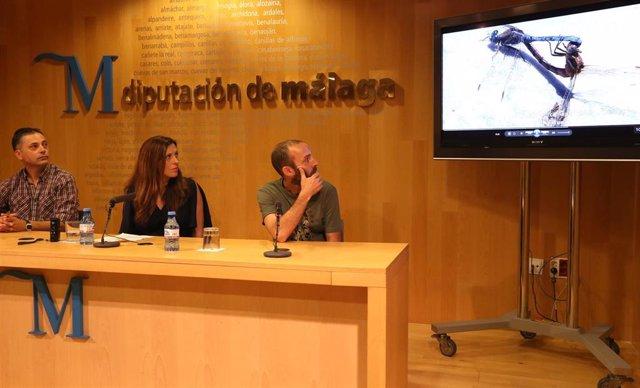 Bravo Diputación de Málaga medio ambiente potencial ornitológico especies de aves diferentes