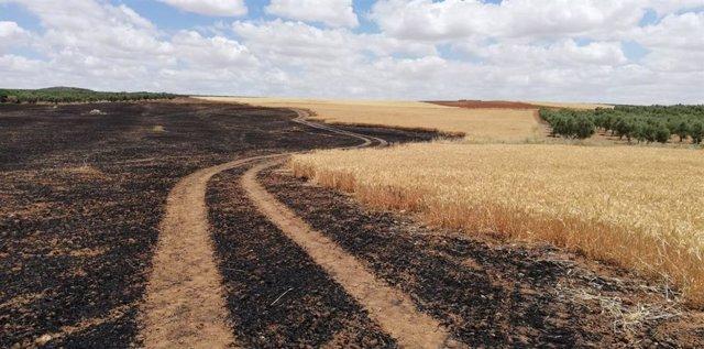 Economía/Agricultura.- UPA reclama al Gobierno que convoque la Mesa de la Sequía