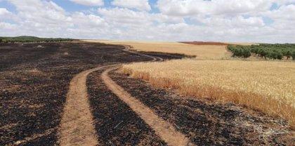 """UPA-UCE Extremadura alerta de que la agricultura y la ganadería afrontan """"ya graves pérdidas"""" por la sequía"""