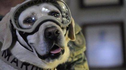 Frida, la perra rescatista más famosa de México se jubila