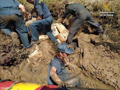 Interceptados cerca de 4.000 kilos de hachís en dos operaciones en la costa de Huelva