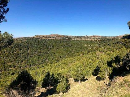 Alerta roja por peligro de incendios forestales en varias zonas de Aragón este miércoles