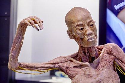 La exposición 'Human Bodies' tendrá en Barcelona su sede permanente