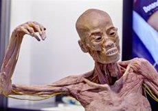 L'exposició 'Human Bodies' tindrà a Barcelona la seva seu permanent (MUSEALIA - Archivo)