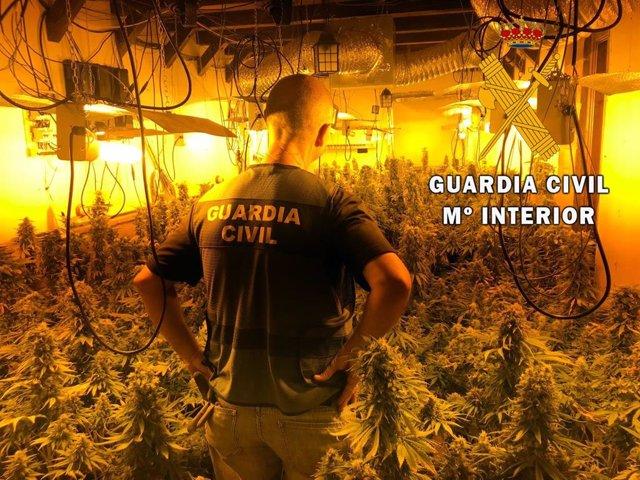 Plantación de marihuana en un chalet de Felix (Almería)