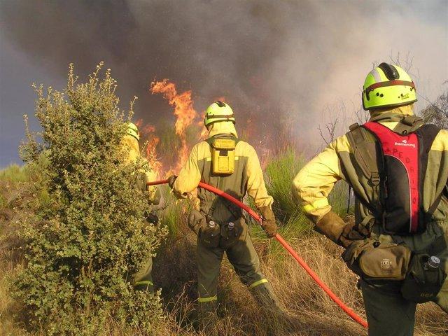 Incendio forestal, extinción, brigadistas. Fuego.