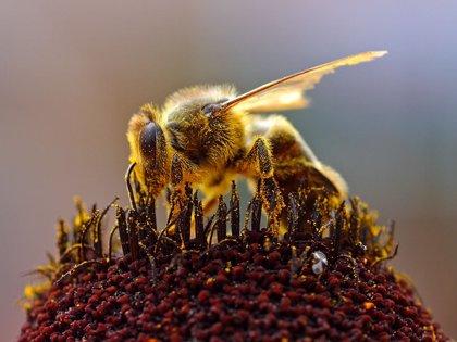Aumentan en tres años las muertes por picaduras de abejas y avispas en España