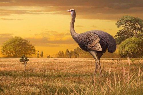 Concepto artístico del pájaro gigante que habitó en Europa.