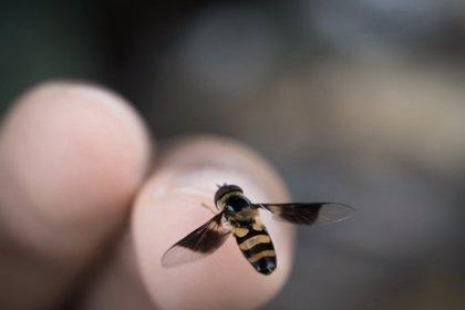 La alergia a abejas y avispas aumenta cada año