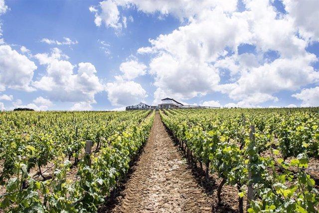 España exporta 93,4 millones de litros de vino menos en los primeros nueve meses de la actual campaña