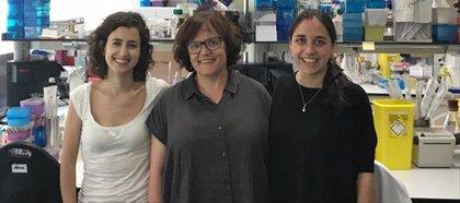Investigadores españoles proponen a IRAK4 como una nueva diana terapéutica en la leucemia linfática aguda