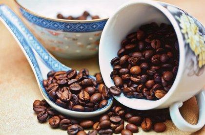 Café, el silencioso detonador de la migración centroamericana que inquieta a Trump