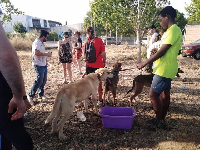 Perros de la perrera de San Bernardo