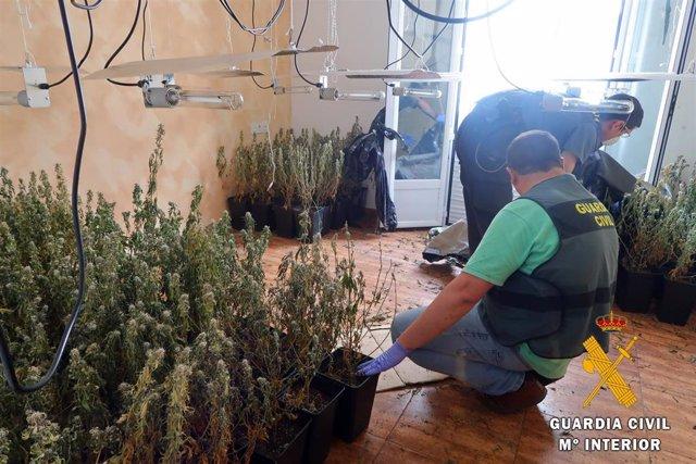 Plantas intervenidas en Gádor