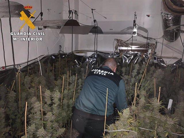 Córdoba.- Sucesos.- Diez detenidos tras desmantelar siete cultivos de marihuana