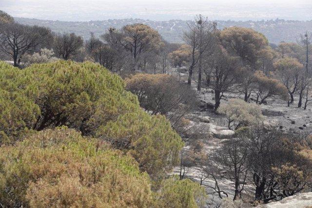 Incendios.- El fuego ha arrasado 38.544 hectáreas este año hasta el 23 de junio,