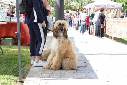 Paterna invierte 200.000 euros en implantar un censo de ADN canino para combatir las heces de perros en la calle
