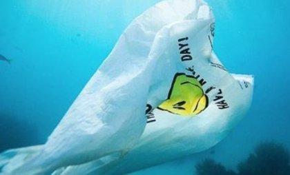 3 de julio: Día Internacional sin Bolsas de Plástico, todas las razones para no utilizarlas más y otras alternativas