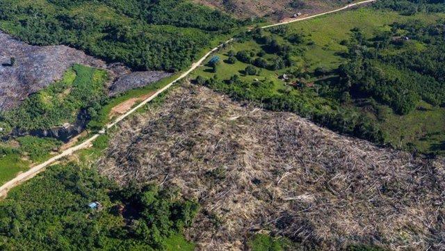 Deforestación en la selva amazónica