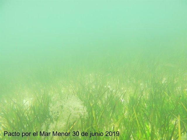 Imagen del fondo del Mar Menor proporcionada por la Plataforma