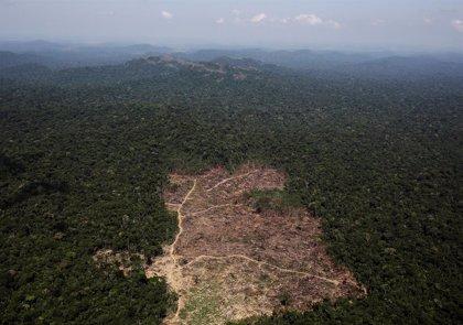 La deforestación en la Amazonía brasileña se dispara a cerca del 90%