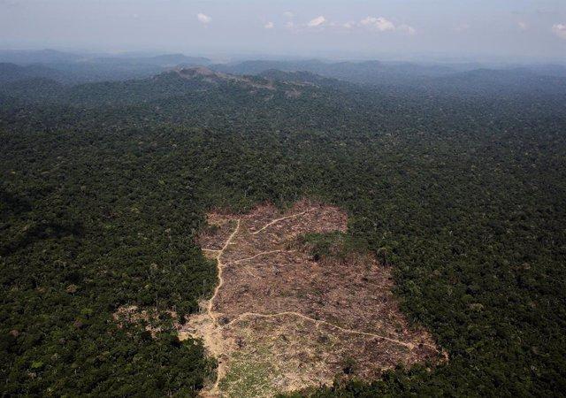 Deforestación de la selva amazónica de Brasil