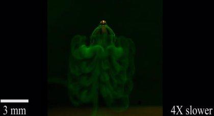 Un pequeño robot blando mimetiza a las medusas
