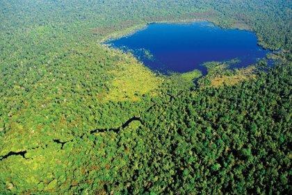El 11% de bosques tropicales húmedos destruidos, válidos para la restauración