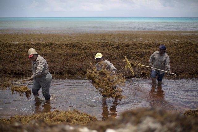 Workers clear Sargassum algae at Gaviota Azul beach in Cancun