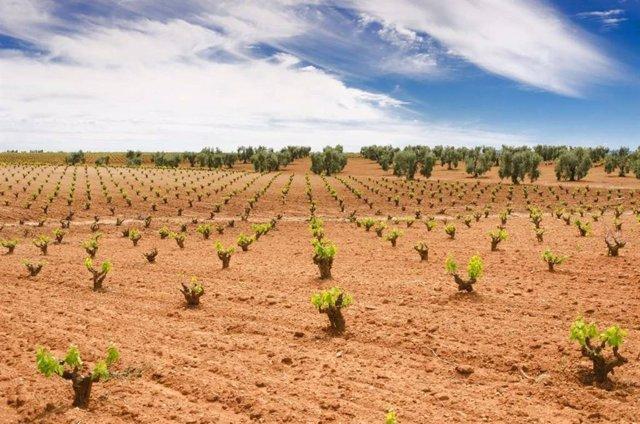 Viñedos Ribera del Guadiana