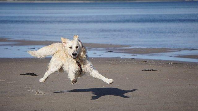 Imagen de recurso de un perro en la playa