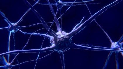 ¿Las células inmunitarias interrumpen el crecimiento del cerebro en la vejez?