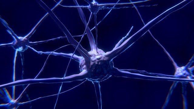 Imagen de una neurona