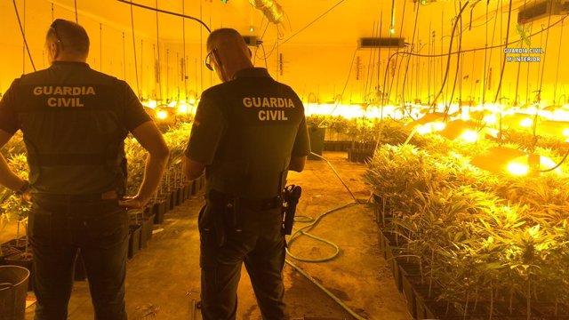 Sevilla.- Sucesos.- Cuatro detenidos por cultivar marihuana en invernaderos de a