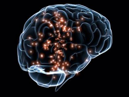 Las células del núcleo dorsal de rafe ayudan a regular el hambre y el gasto de energía