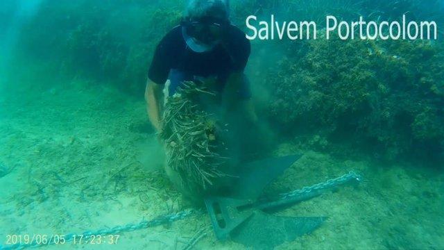 Una submarinista mostra els danys a la Posidonia Oceànica provocats per l'ancla d'un vaixell, en un vídeo difós per Salvem Portocolom